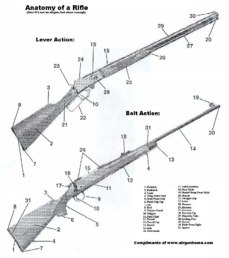 Rifle Anatomy Picture
